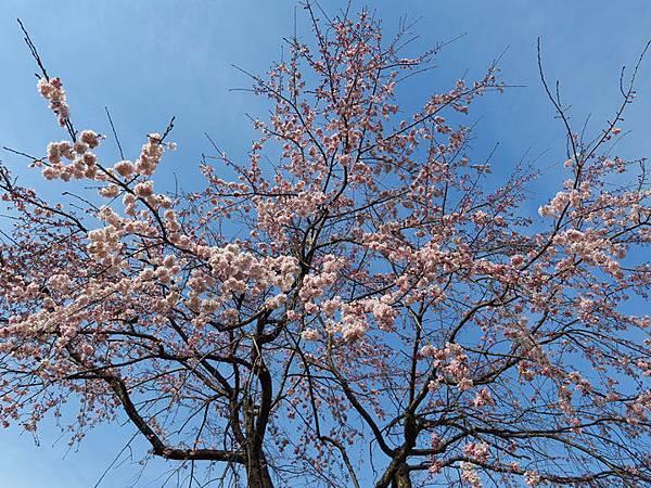 Kyoto av2.JPG