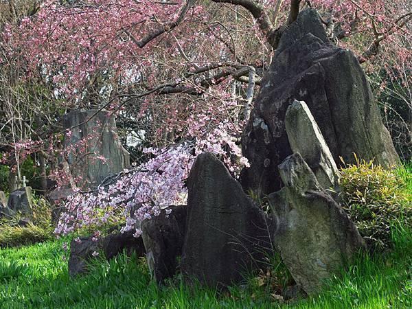 Kyoto av3.JPG