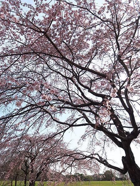 Kyoto av5.JPG