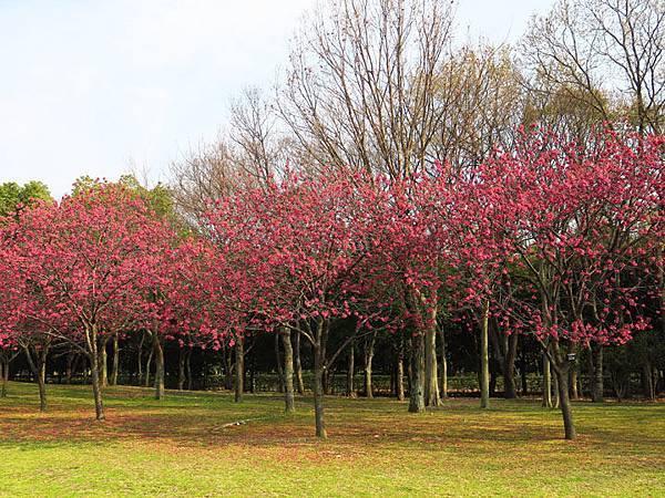 Kyoto av6.JPG