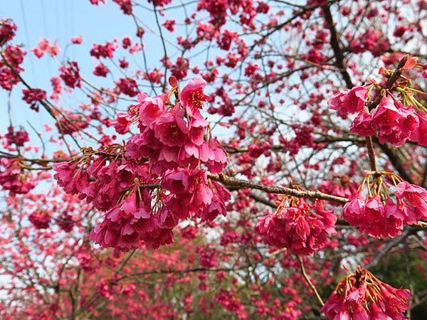 Kyoto av7.JPG