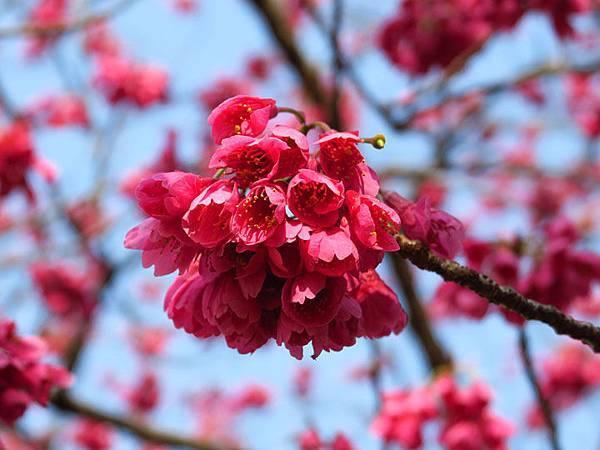 Kyoto av8.JPG