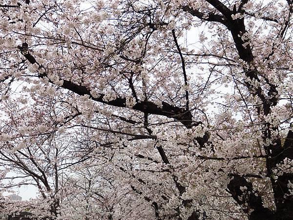 Kyoto aw5.JPG