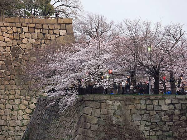 Kyoto aw6.JPG