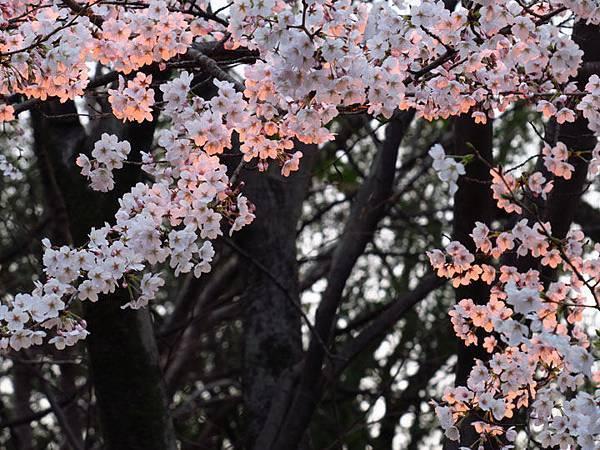 Kyoto aw8.JPG