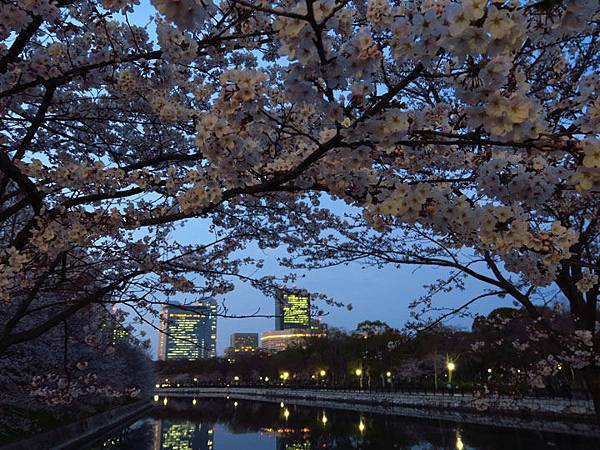 Kyoto aw9.JPG