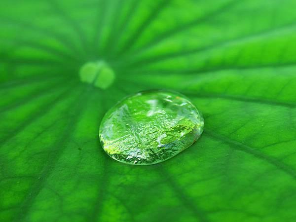 lotus l1.JPG
