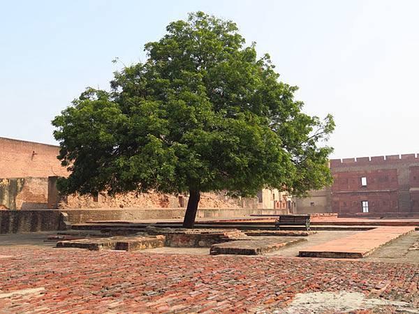 Agra b2.JPG