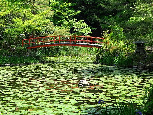 Kyoto ff1.JPG