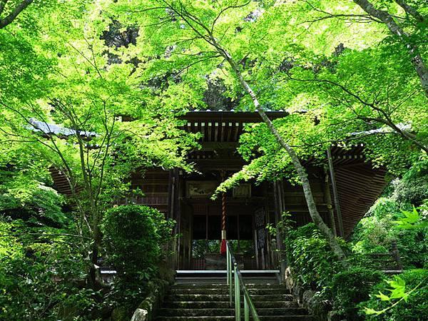 Kyoto fh4.JPG