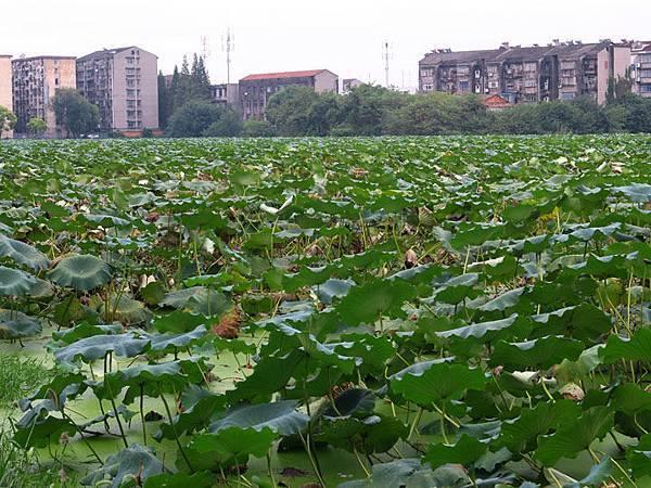 Jingzhou b1.JPG