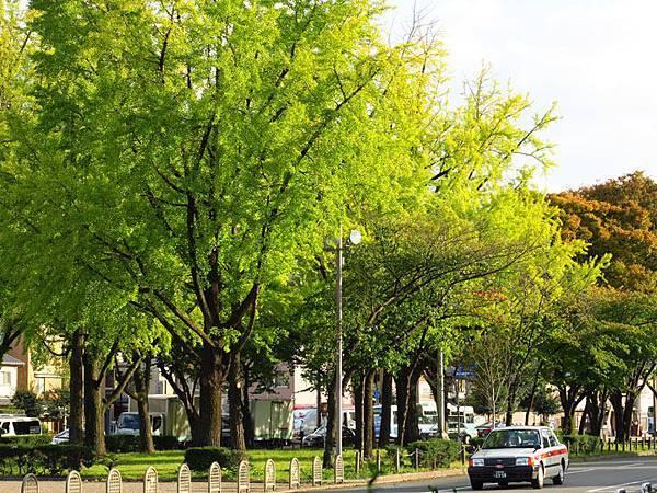 Kyoto gd2.JPG