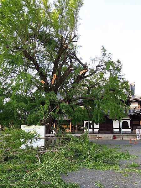 Kyoto gf6.JPG