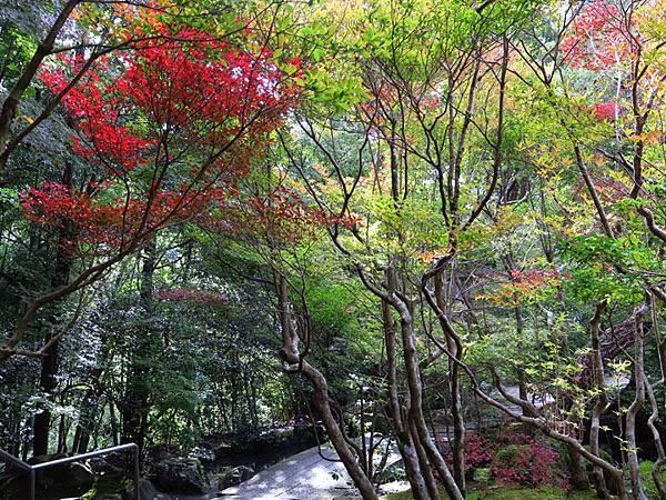 Kyoto gh9.JPG