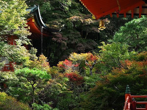 Kyoto gi1.JPG