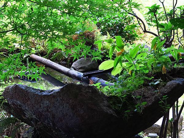 Kyoto gi4.JPG