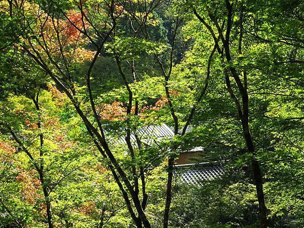 Kyoto gu3.JPG