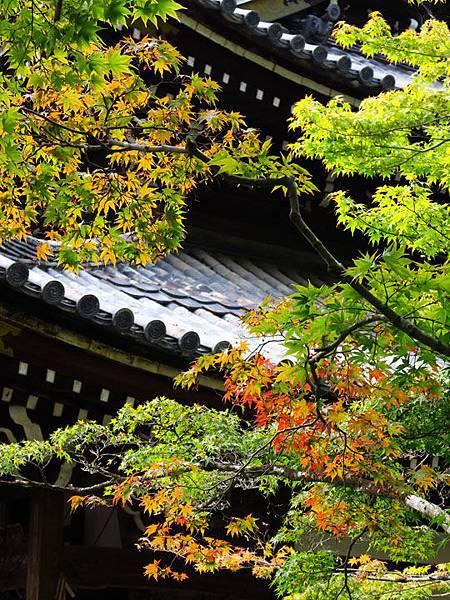 Kyoto gu6.JPG