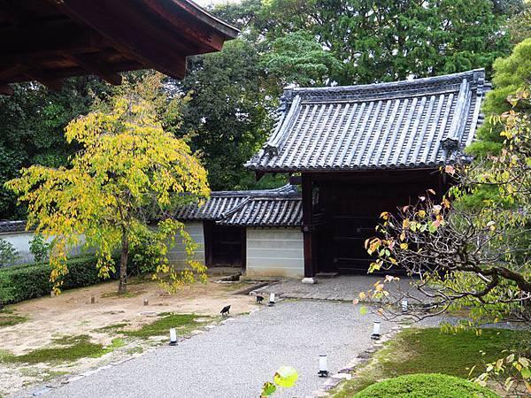 Kyoto gv3.JPG