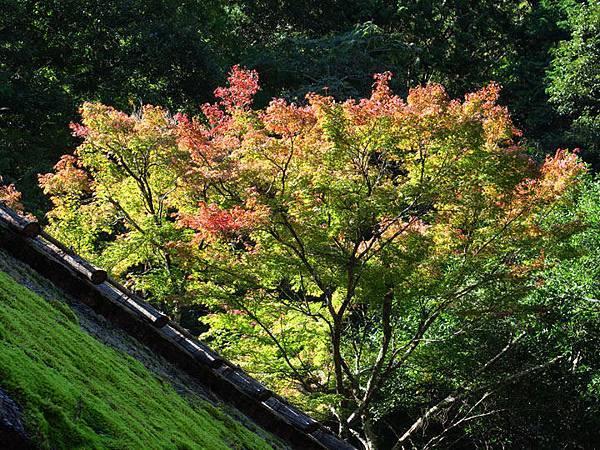 Kyoto ha4.JPG