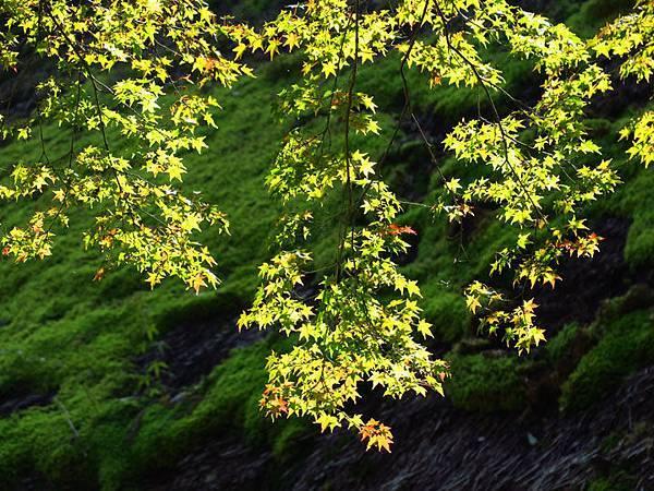Kyoto ha7.JPG
