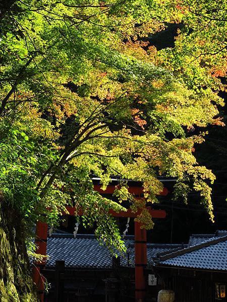 Kyoto ha9.JPG
