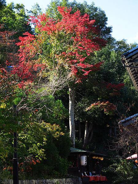 Kyoto hb7.JPG