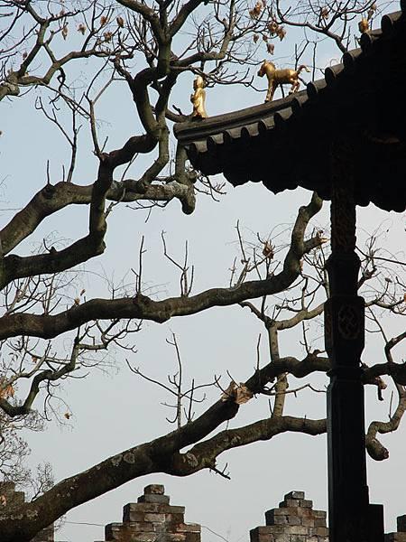 Kunming d4.jpg