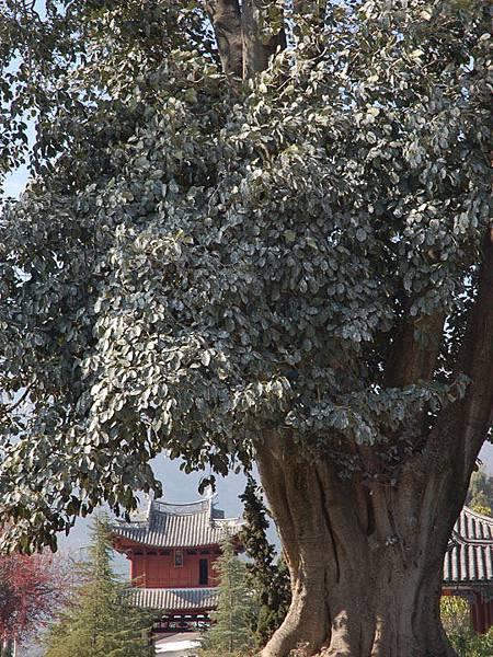 Xizhou c6.jpg