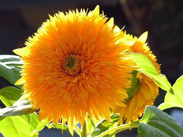 flower a2.JPG