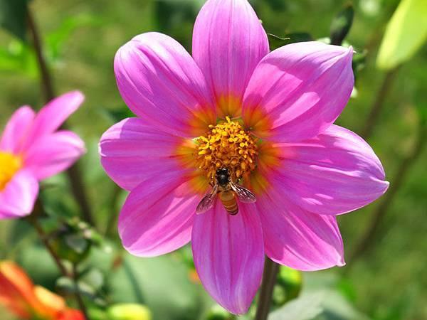flower a5.JPG