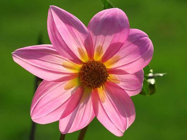 flower a4.JPG