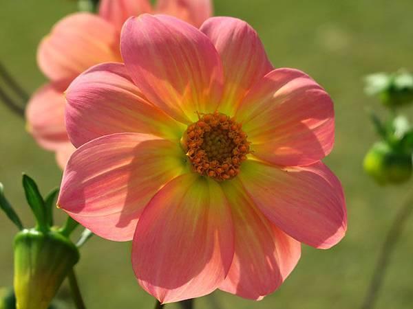 flower a6.JPG