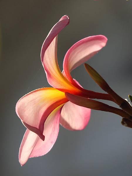 flower a8.JPG