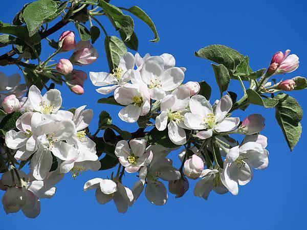 flower a19.JPG