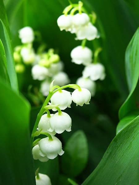 flower a18.JPG
