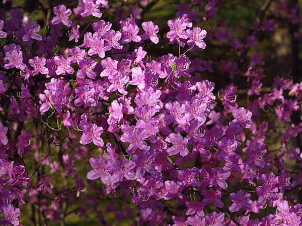 flower a20.JPG