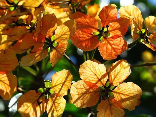 flower a22.JPG