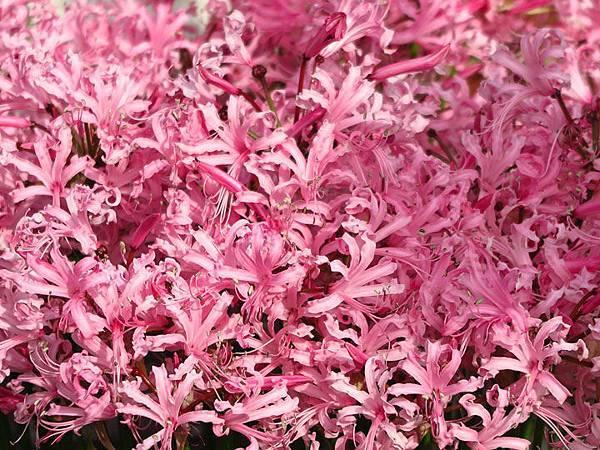 flower a23.JPG