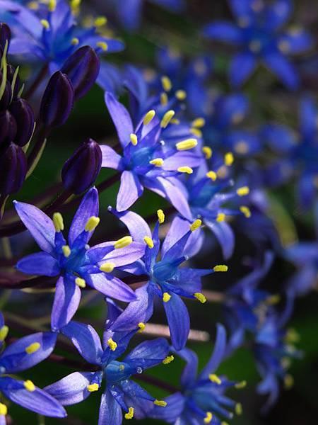 flower a24.JPG