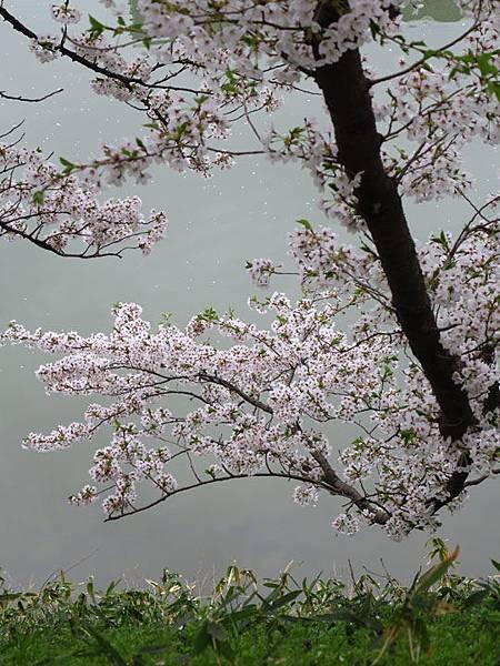 Yamagata f8.JPG