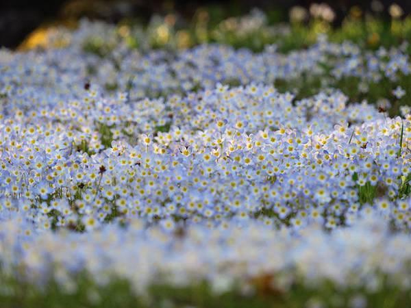 Flower b1.JPG