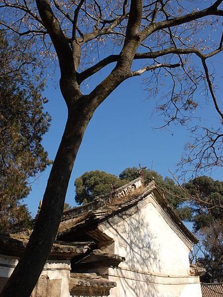 Jianchuan c6.jpg