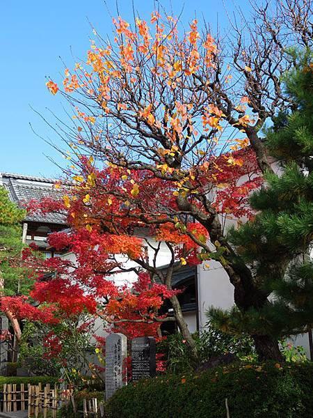 Nagano e4.JPG
