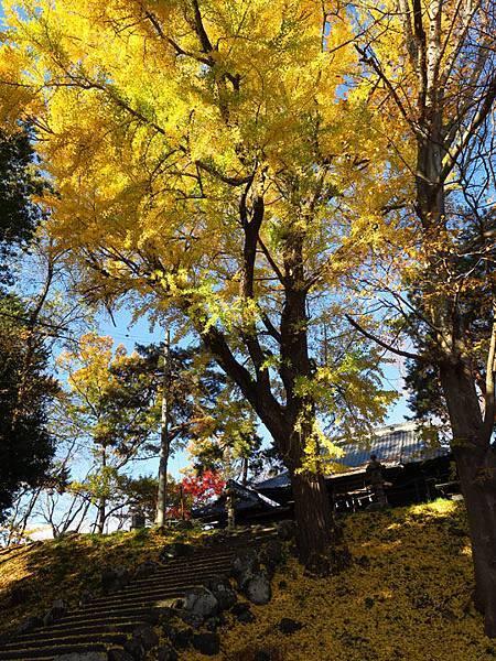Nagano i1.JPG