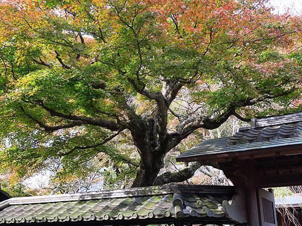 Kamakura j2.JPG