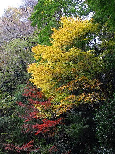 Kamakura j7.JPG