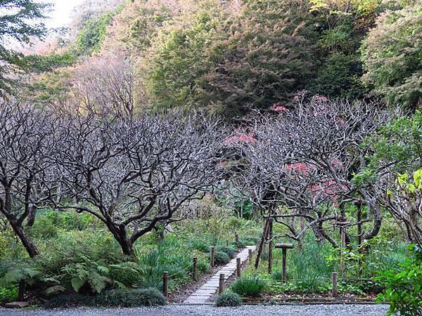 Kamakura m1.JPG