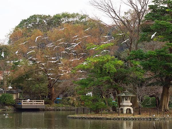 Kamakura l8.JPG