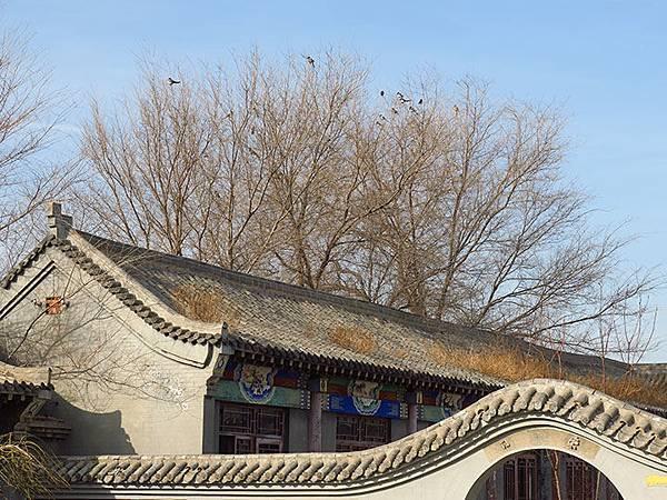Cangzhou a5.JPG